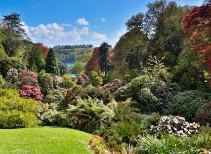 Trees and flowering shrubs at Trebah Garden in Cornwall.