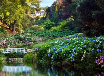 A bridge spanning the pond at Trebah Garden.