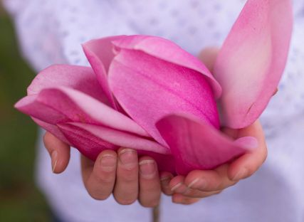 A woman holds a large magnolia flower.