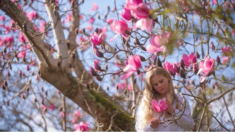 A girl stands beneath a pink magnolia tree.