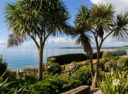 Palm trees in The Nare's gardens with the Cornish coast beyond.